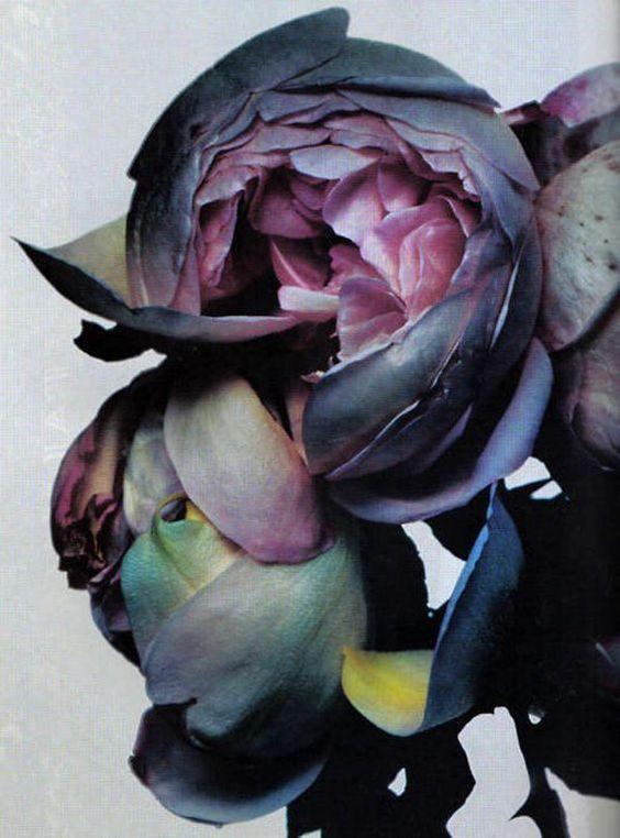 aubertine-flowers