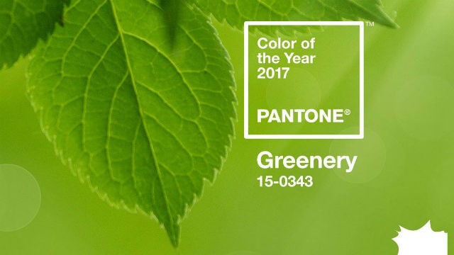 Pantone is Feeling Fresh with the 2017 Color of the Year