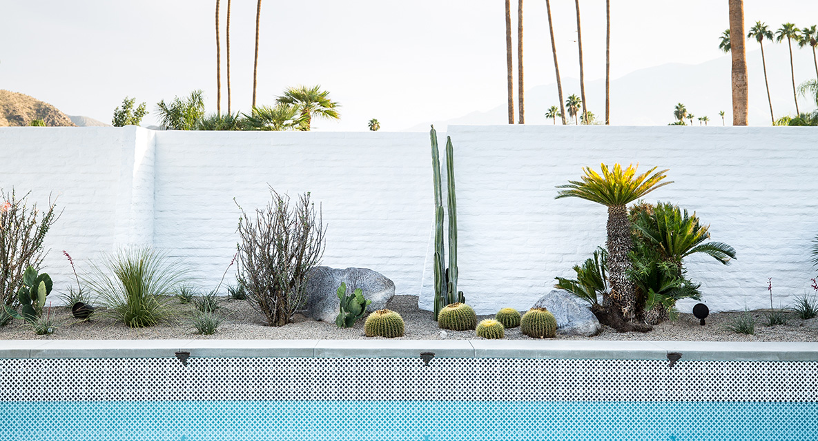 No desert home is complete without some landscaping that plays with scale. Usually we recommend low-maintenance succulents, especially in the desert, but if you truly want to achieve the Mid-century Moroccan aesthetic, go for a mix of larger palms as well!
