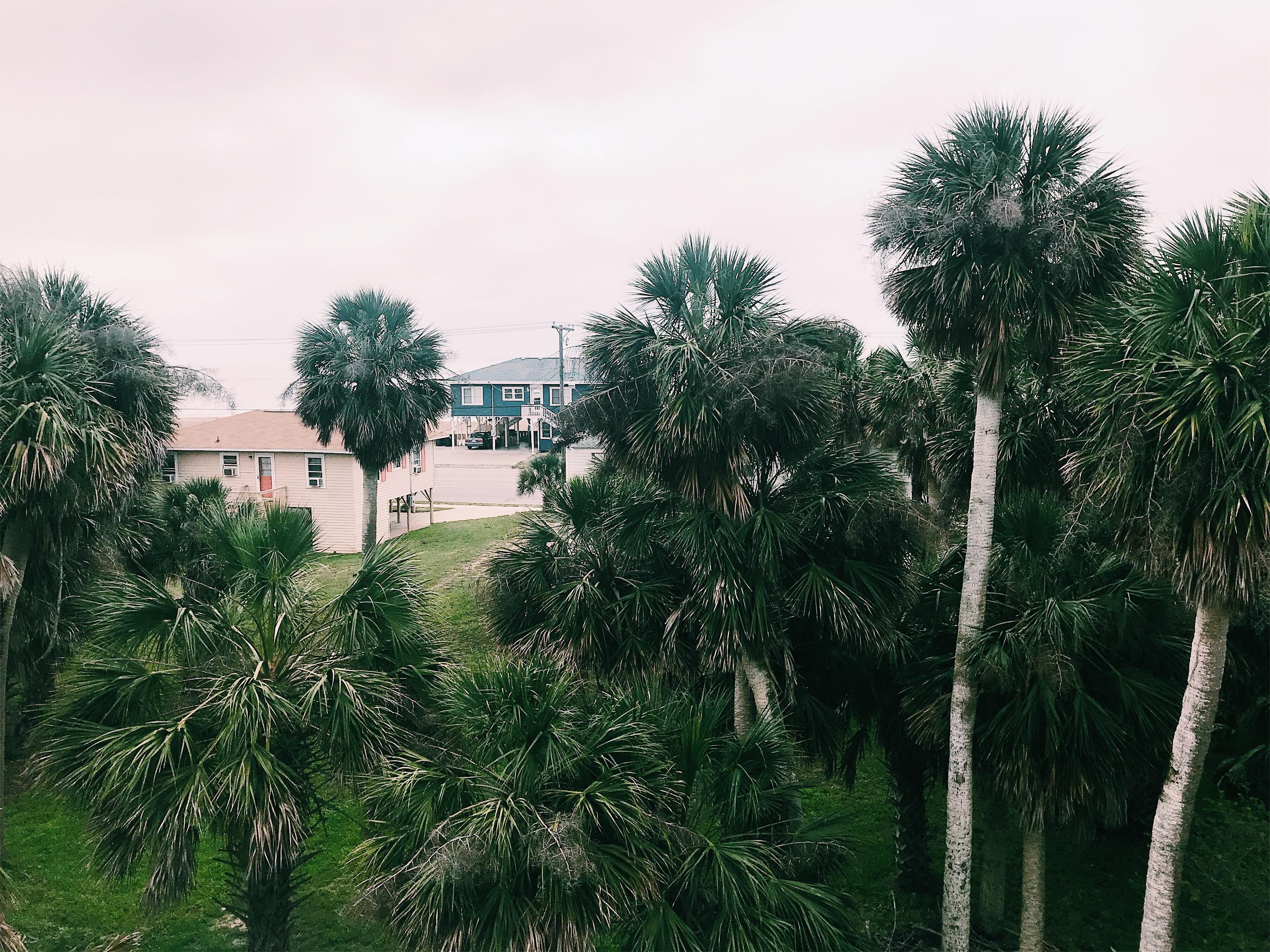 Edisto Beach Views