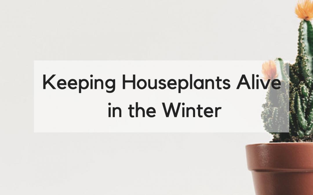 Help, I'm Killing My Houseplants II: Winter Edition