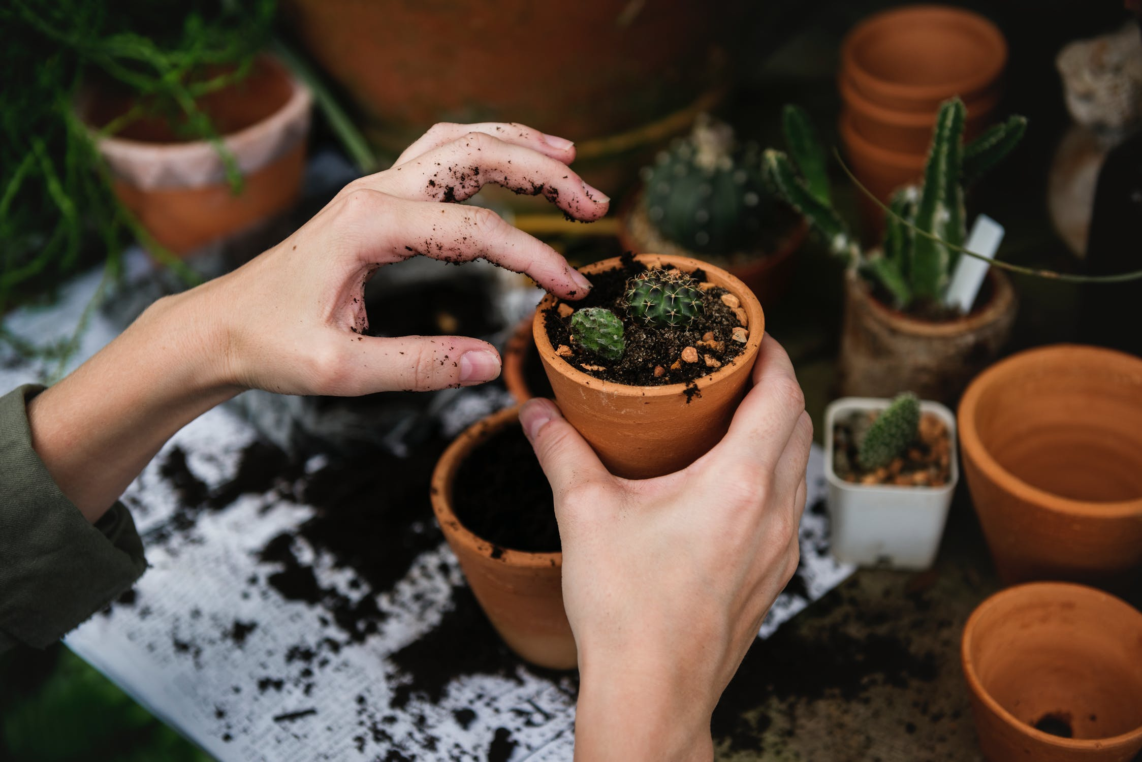 no repotting plants in the winter